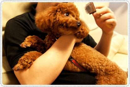20120530_grooming1.jpg