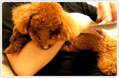 20120530_grooming3.jpg