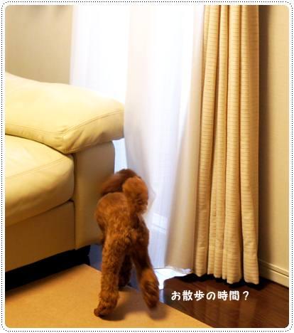 20120530_grooming4.jpg