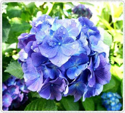 20120611_sanpo1.jpg