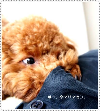 20120613_pokke2.jpg