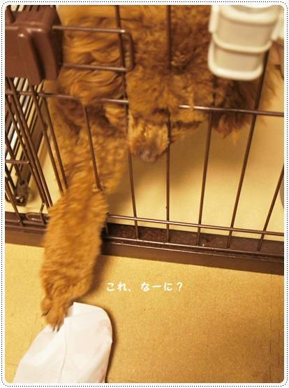 20120613_pokke5.jpg