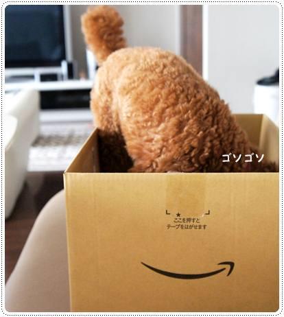 20120622_amazon3.jpg
