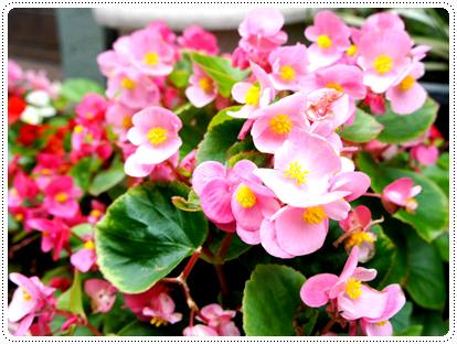 20120625_sanpo2.jpg