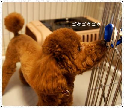 20120627_shopping2.jpg