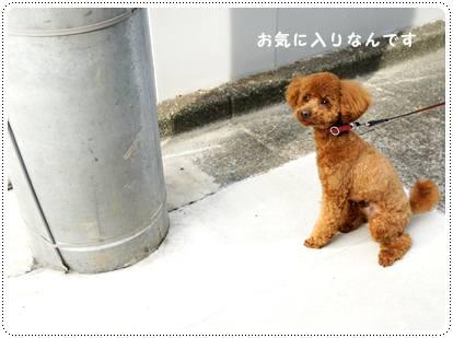 20120629_sanpo2.jpg