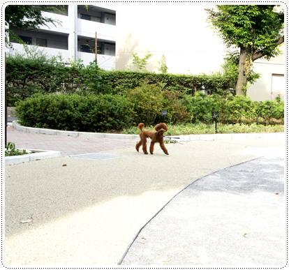 20120629_sanpo3.jpg