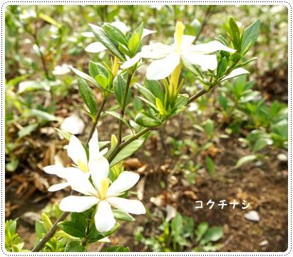 20120702_med5.jpg