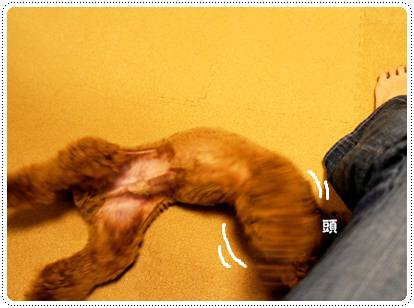 20120704_run5.jpg