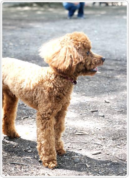 20120716_dogrun2.jpg