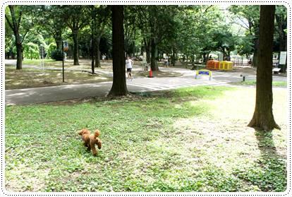 20120716_dogrun3.jpg