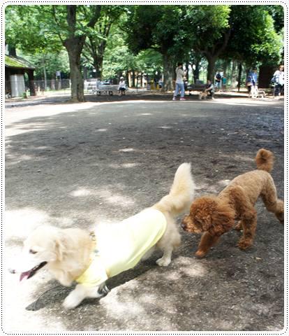 20120716_dogrun4.jpg