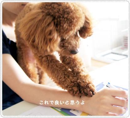 20120718_guest3.jpg