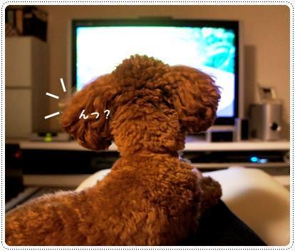 20120725_TV6.jpg