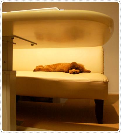 20120727_sleeping1.jpg