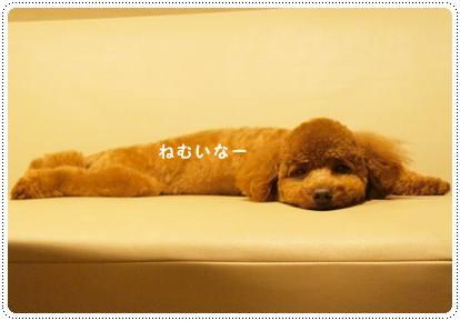 20120727_sleeping2.jpg