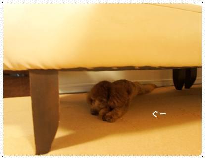 20120727_sleeping3.jpg
