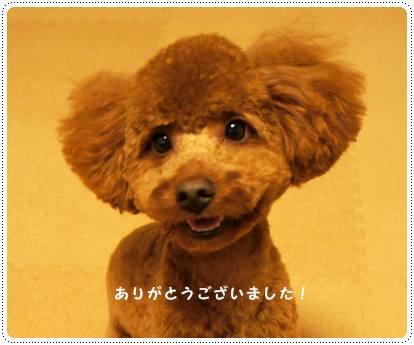 20120806_nasu4.jpg