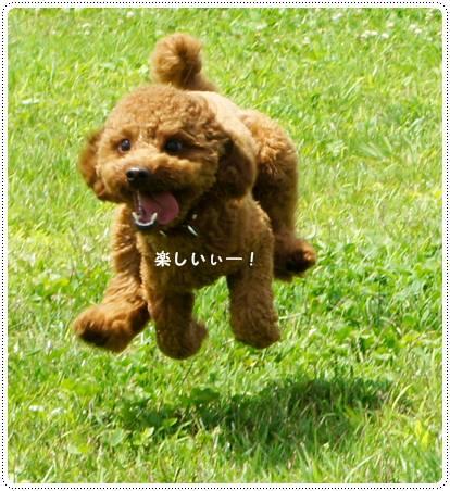 20120808_nasu9.jpg