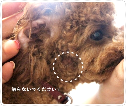 20120919_cut5.jpg