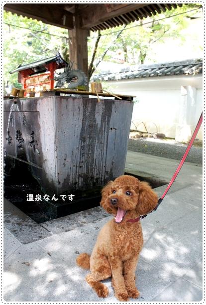 20121001_syuzenji3.jpg