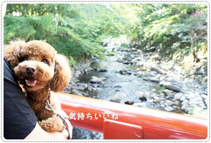 20121001_syuzenji6.jpg