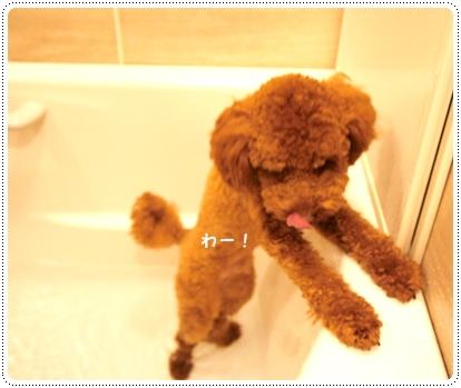 20121017_bath1.jpg