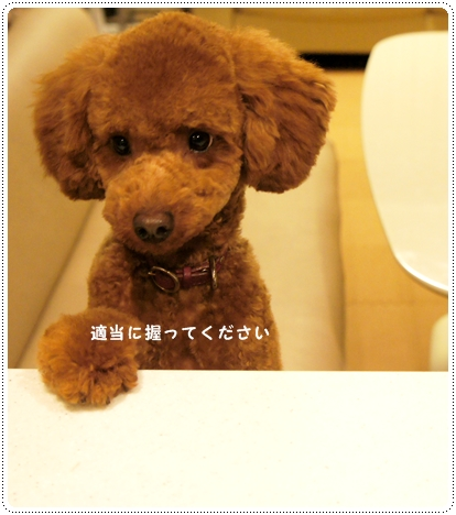 20121022_cut7.jpg