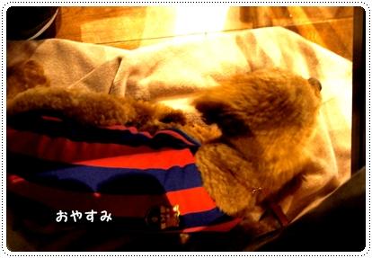 20121029_cototoi5.jpg