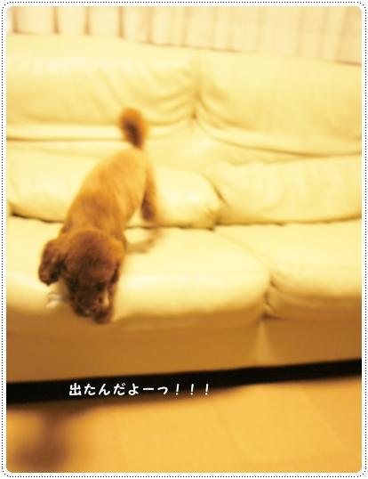 20121102_kimochi3.jpg