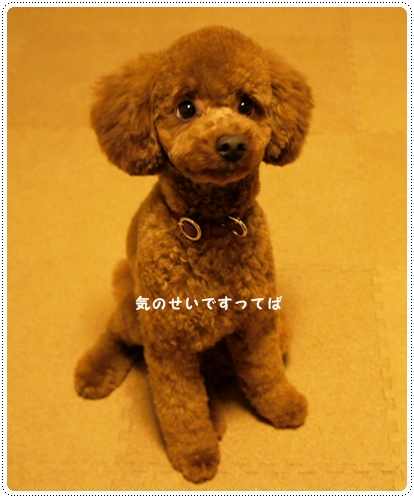 20121109_kakusa2.jpg