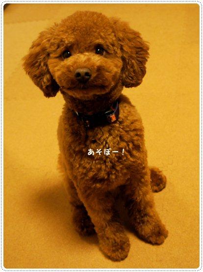 20121207_home5.jpg