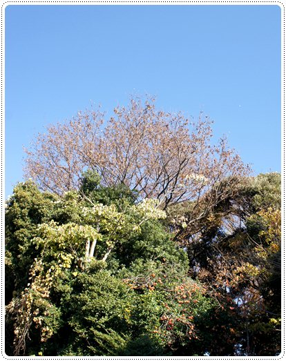 20121210_mochi5.jpg