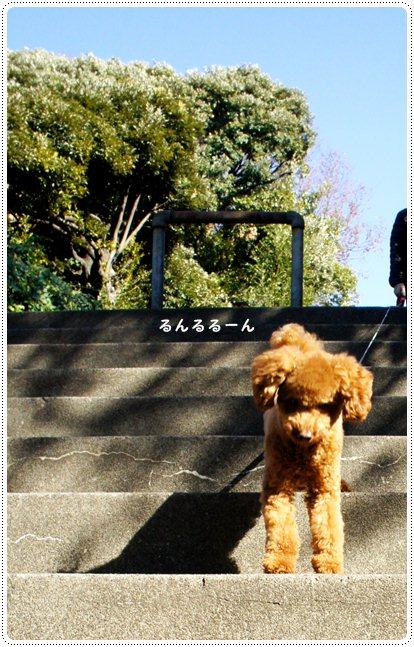 20121212_stair1.jpg