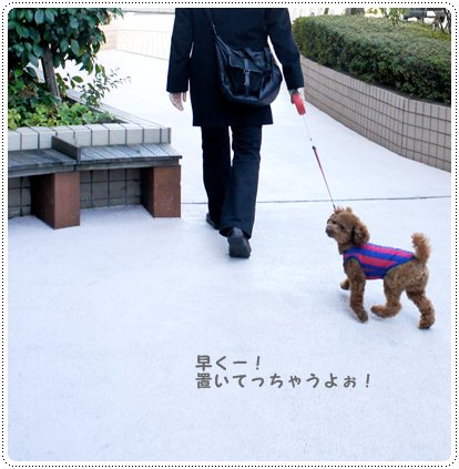 20121217_election2.jpg