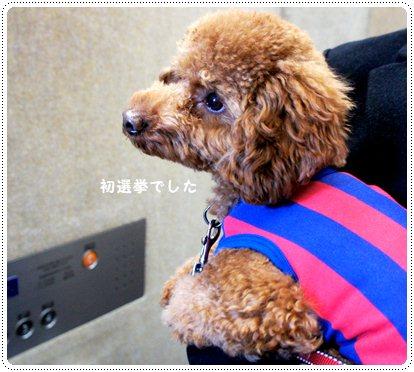 20121217_election4.jpg