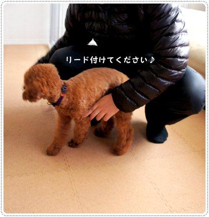 20130111_sanpo1.jpg