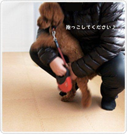 20130111_sanpo2.jpg