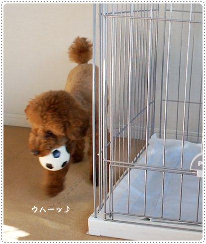 20130114_sukima5.jpg