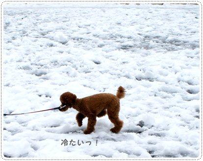 20130118_yoyogi7.jpg