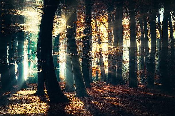 001-stunning-photography-oerwout.jpg
