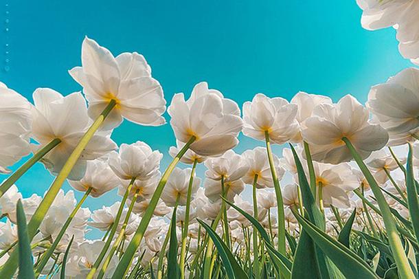002-stunning-photography-oerwout.jpg
