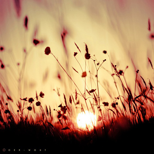 006-stunning-photography-oerwout.jpg