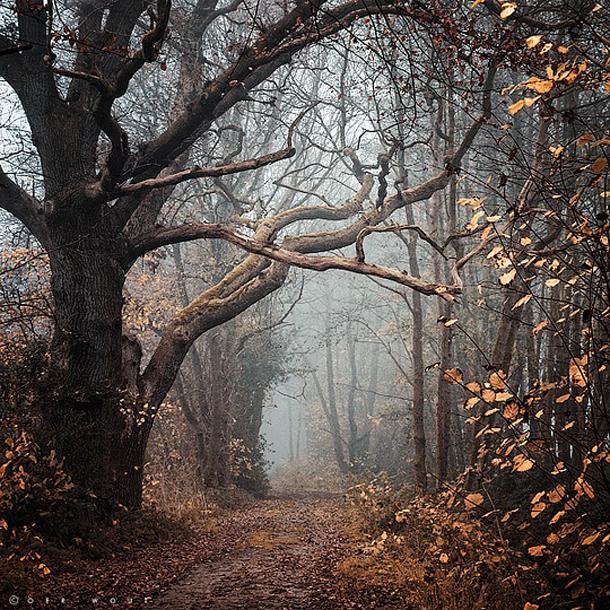 008-stunning-photography-oerwout.jpg
