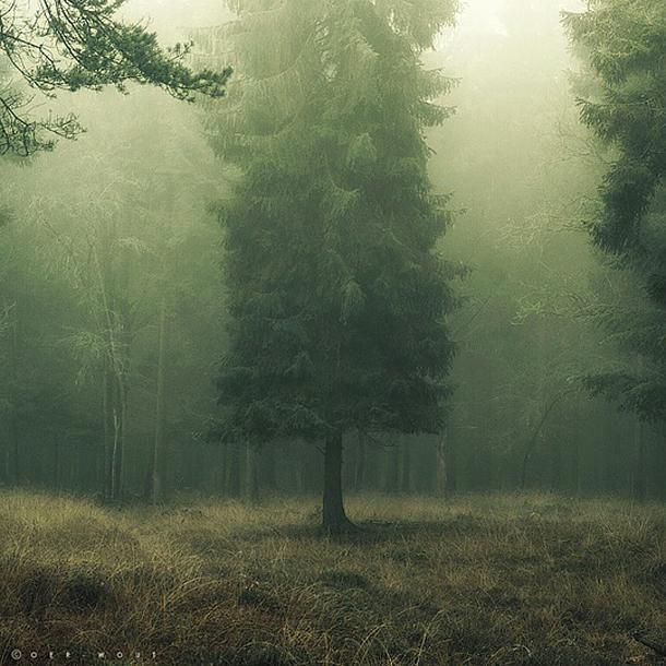 010-stunning-photography-oerwout.jpg