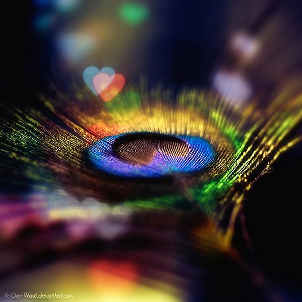 013-stunning-photography-oerwout.jpg