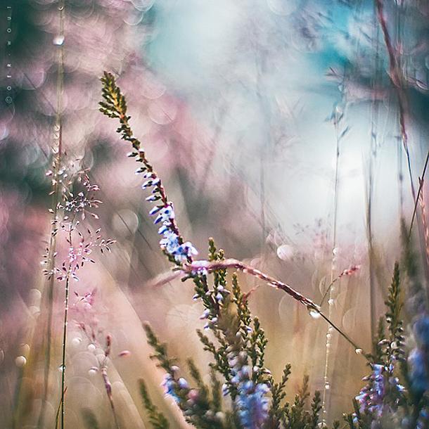015-stunning-photography-oerwout.jpg