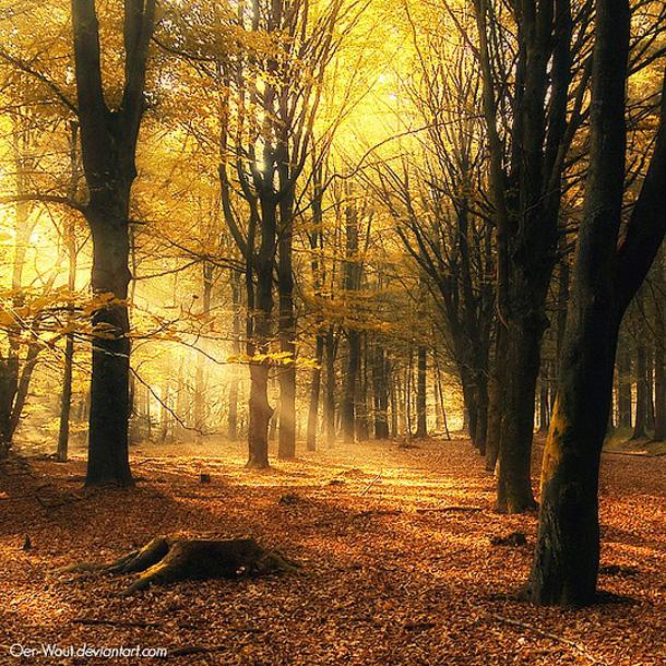 022-stunning-photography-oerwout.jpg