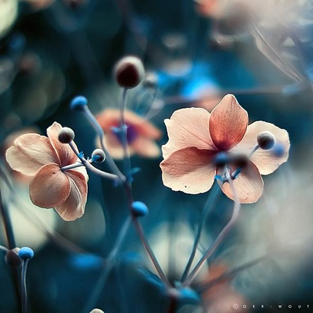 025-stunning-photography-oerwout.jpg