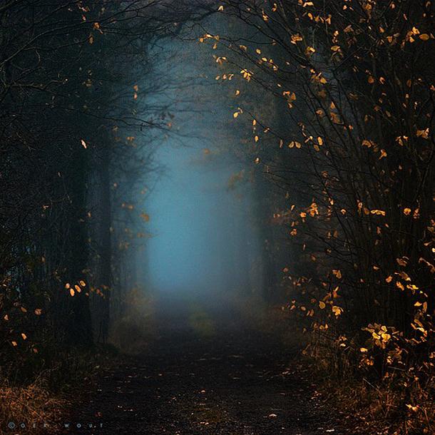 028-stunning-photography-oerwout.jpg